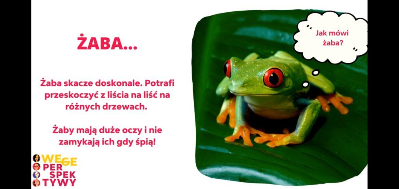 żaba wegeperspektywy