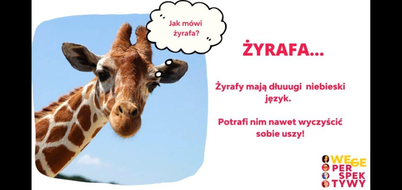 żyrafa wegeperspektywy